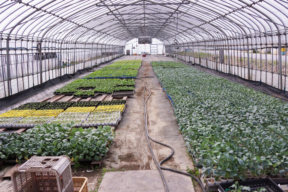 野菜苗のハウス。