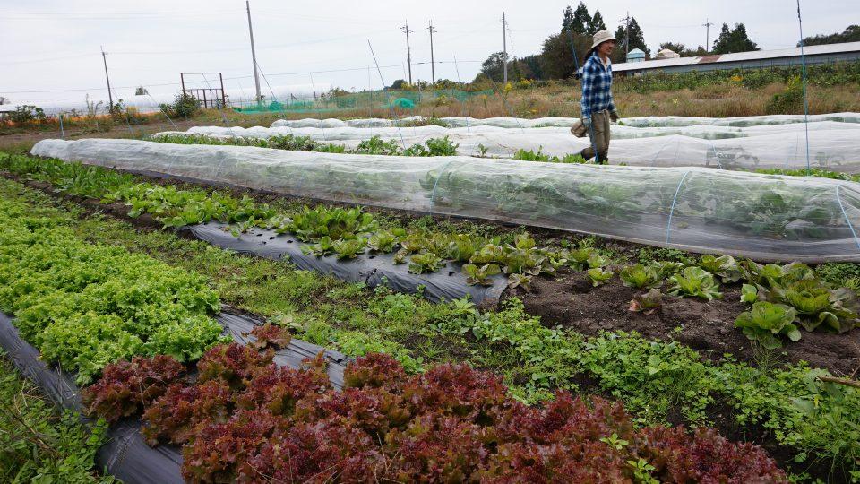 みのり農園さんでは年間約200種の野菜を、化学合成農薬・化学合成肥料を使用せず栽培する