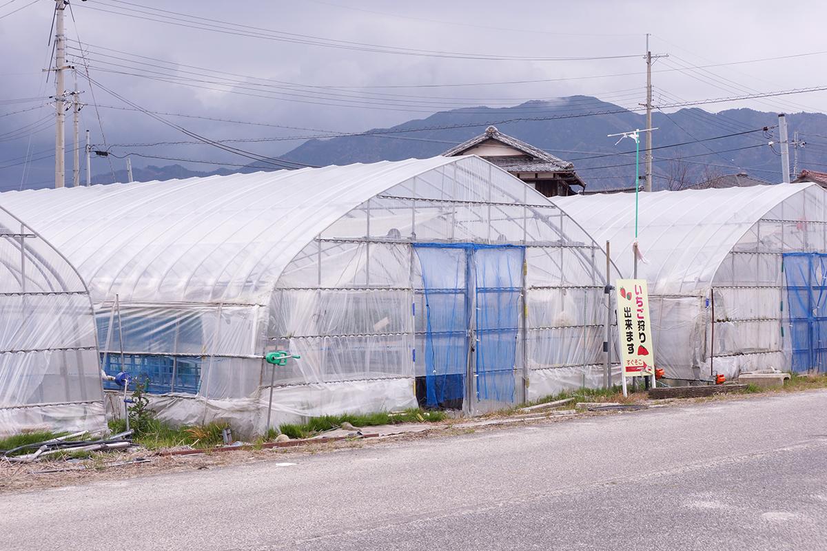 福田那夢さんが営むいちご農園「金ちゃんハウス」