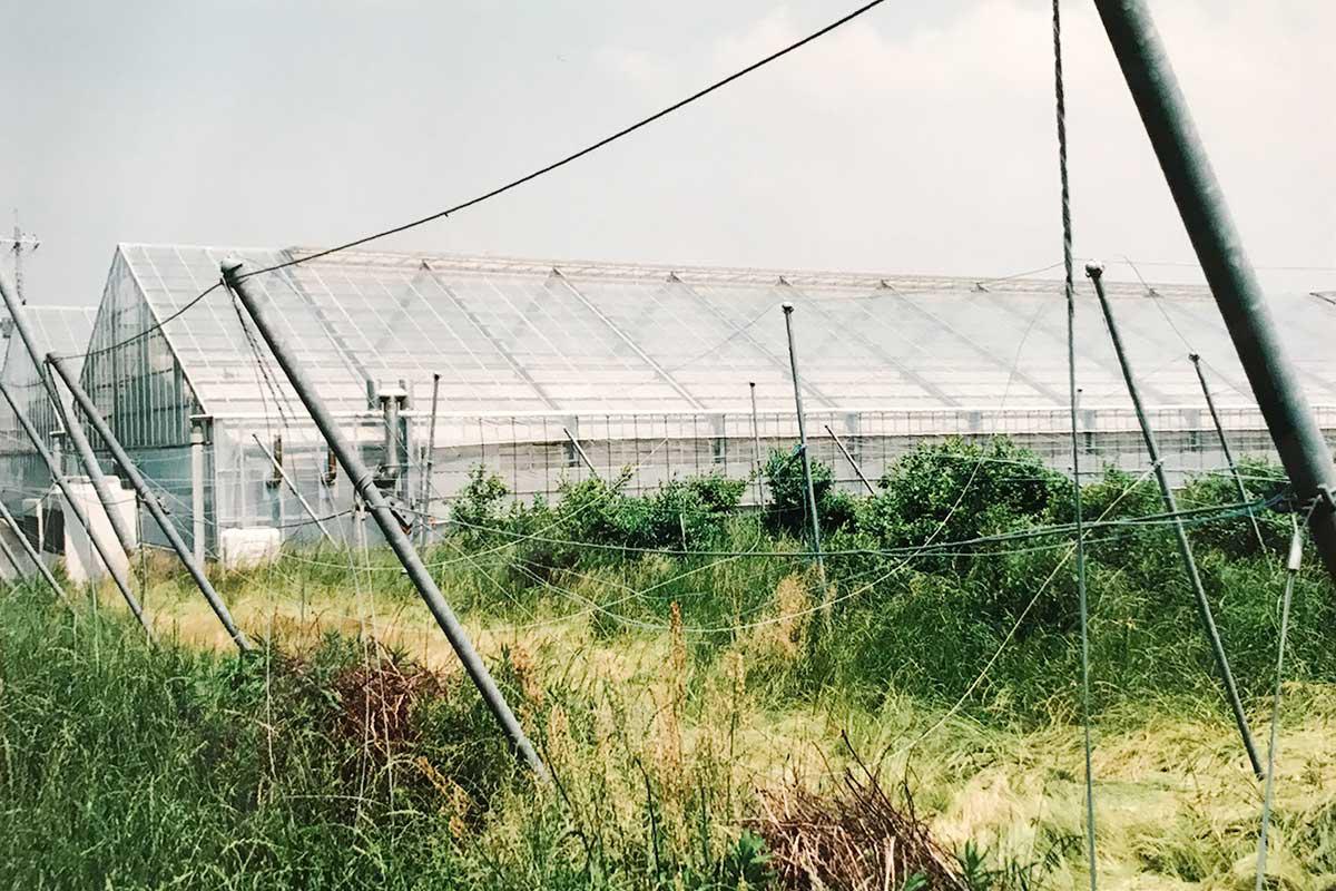 2006年の大雪で防鳥ネットが倒壊したブルーベリー園。